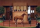 Keeneland September Yearling Sale Wrap - Day 1