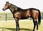 Major Sire Silver Deputy Euthanized at Age 29