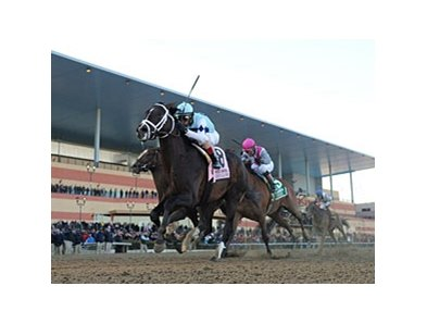 "Verrazano won the 2013 Wood Memorial.<br><a target=""blank"" href=""http://photos.bloodhorse.com/AtTheRaces-1/at-the-races-2013/27257665_QgCqdh#!i=2443955223&k=Q7g8rJt"">Order This Photo</a>"