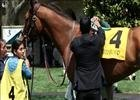 Keeneland Spring Meet Highlights 2013