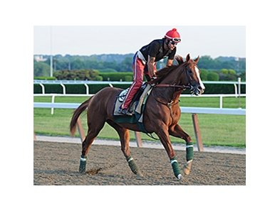 California Chrome jogs at Belmont Park May 27.