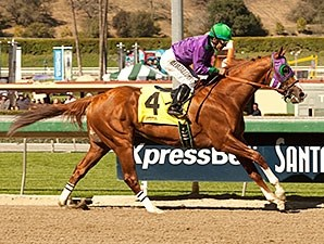 California Chrome cruises to victory in the San Felipe Stakes.