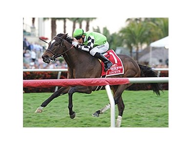 "Lochte won the 2014 Gulfstream Park Turf Handicap. <br><a target=""blank"" href=""http://photos.bloodhorse.com/AtTheRaces-1/At-the-Races-2014/i-9cqhWfs"">Order This Photo</a>"