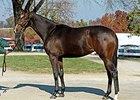 Samantha Nicole as a yearling.