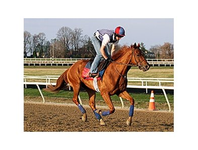 "Ring Weekend <br><a target=""blank""http://photos.bloodhorse.com/TripleCrown/2014-Triple-Crown/Kentucky-Derby-Workouts/i-8pbjDzn"">Order This Photo</a>"