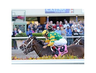 "Palace Malice will carry 121 pounds in the New Orleans Handicap.<br><a target=""blank"" href=""http://photos.bloodhorse.com/AtTheRaces-1/At-the-Races-2014/35724761_2vdnSX#!i=3112263756&k=pQmL9zN"">Order This Photo</a>"