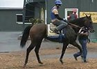 Preakness Stakes News Update for May 15, 2014