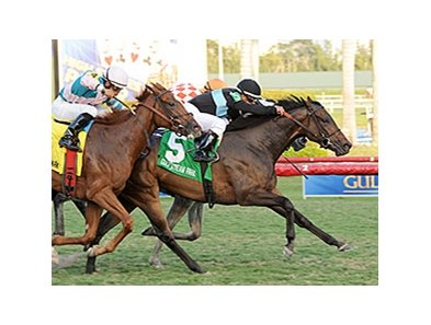 "Premier Steps won the 2013 Sweetest Chant Stakes. <br><a target=""blank""http://photos.bloodhorse.com/AtTheRaces-1/At-the-races-2013/i-jTw5vZZ"">Order This Photo</a>"