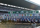 Belmont Stakes Starting Gate and Grand Stand