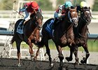 Conquest Boogaloo Stretches Out at Woodbine