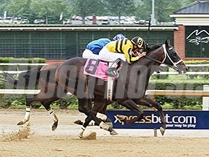 Carve won the 2014 West Virginia Governor's Stakes.