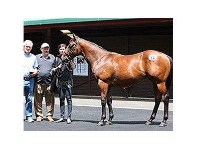 Lot 73 by Fastnet Rock out of Katie Lee was the sale topper at $800,000.