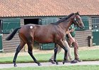 Lot 97, an Oasis Dream colt, sold for 775,0000 guineas on October 7.