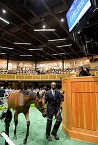 Hip 310, a Tizway filly, brought $250,000, at the Fasig-Tipton New York-bred yearling sale.
