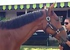 Keeneland Sept: Hip 541 Indian Charlie Filly