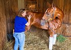 Magic Touch: Human Therapist Helps Racehorses