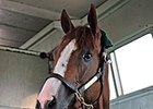 California Chrome riding to Churchill Downs.