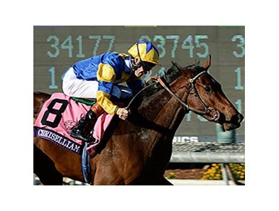 "Chriselliam<br><a target=""blank"" href=""http://photos.bloodhorse.com/BreedersCup/2013-Breeders-Cup/Juvenile-Fillies-Turf/33149817_jvHmZP#!i=2876862080&k=nCXNMgc"">Order This Photo</a>"