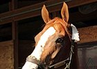 "California Chrome<br><a target=""blank"" href=""http://photos.bloodhorse.com/AtTheRaces-1/At-the-Races-2014/i-QqfQcJg"">Order This Photo</a>"