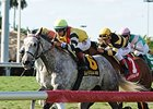 Inimitable Romanee Gets Gulfstream Distance