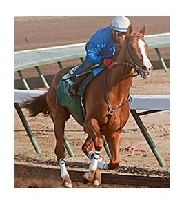 California Chrome has been working at Los Alamitos.