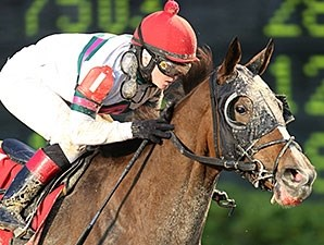 Class Included is a nine-time stakes winner.