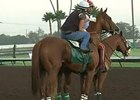 California Chrome Work: 8/15/2014