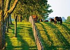 Major Kentucky Equine Survey About to Begin