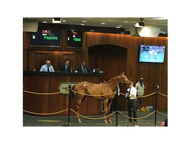 Zensational Storm, Hip 361, sold for $75,000 on January 23.