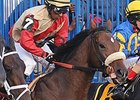Boston Marathon Tragedy Inspires Horse Names