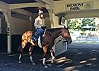 Beholder Schools in the Paddock 6/6/2014