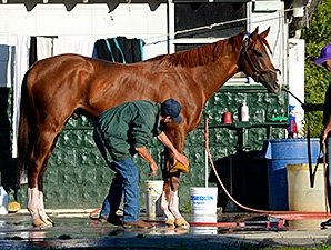 California Chrome Doing Well After Breeze
