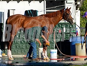 California Chrome returned fine from a morning jog June 1.