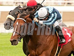 Quick Casablanca won the 2014 Last Tycoon Stakes.