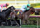 "Csaba won the 2013 Hal's Hope.<br><a target=""blank"" href=""http://photos.bloodhorse.com/AtTheRaces-1/at-the-races-2013/27257665_QgCqdh#!i=2318352443&k=pXN69XF"">Order This Photo</a>"