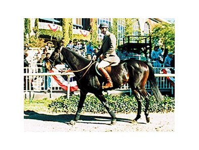 Flatterer makes an appearance at the 1990 Breeders' Cup.