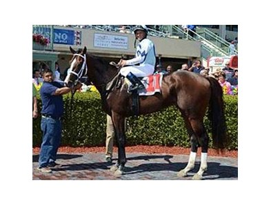 Divine Oath has 2 wins in 2 starts.