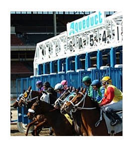 The new provision is in response to the recent round of equine deaths at Aqueduct Racetrack.