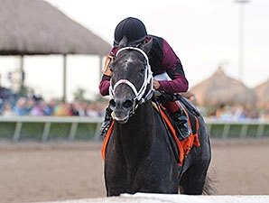 Cairo Prince Returns to Work at Palm Meadows