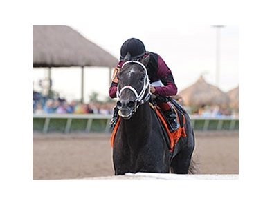"Cairo Prince<br><a target=""blank"" href=""http://photos.bloodhorse.com/AtTheRaces-1/At-the-Races-2014/35724761_2vdnSX#!i=3041743171&k=WjzhfLt"">Order This Photo</a>"