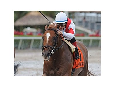"Storming Inti faces 10 in the American Turf Stakes.<br><a target=""blank"" href=""http://photos.bloodhorse.com/AtTheRaces-1/at-the-races-2013/27257665_QgCqdh#!i=2940130272&k=xfZRfcR"">Order This Photo</a>"