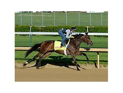 "Big Bazinga worked at Churchill Downs on April 26, 2014.  <br><a target=""blank"" href=""http://photos.bloodhorse.com/TripleCrown/2014-Triple-Crown/Kentucky-Derby-Workouts/i-vKMVHdx"">Order This Photo</a>"