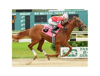 Mighty Brown comes home strong to win the Pasco Stakes at Tampa Bay Downs.