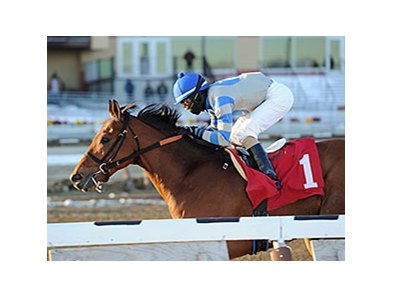 "Noble Moon<br><a target=""blank"" href=""http://photos.bloodhorse.com/AtTheRaces-1/At-the-Races-2014/35724761_2vdnSX#!i=3005507950&k=3Z79JZt"">Order This Photo</a>"