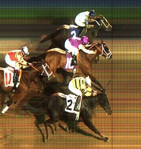 The win photo shows three noses on the line together.