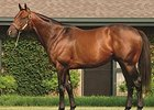 Stallion Bluegrass Cat to Shuttle to Uruguay
