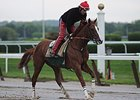 "California Chrome galloped 1 3/4 miles over a sloppy track on May 24.<br><a target=""blank"" href=""http://photos.bloodhorse.com/TripleCrown/2014-Triple-Crown/Belmont-Stakes-146/i-s8Ct5sn"">Order This Photo</a>"