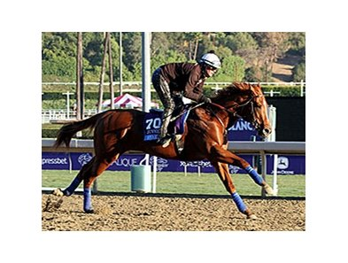 Smarty's Echo