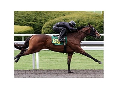 Hip 69, a Sky Mesa colt, was the fastest horse to work an eighth-mile, covering the distance in :09 2/5.