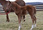 Filly by Nicanor born on Feb 19, out of Kansas Kitty.